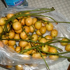 050428-mafai-fruit