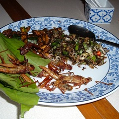050816-a-plate-of-insects