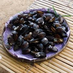 070427-clams