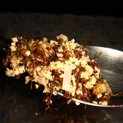 080510-miang-mot-daeng-ants-with-coconut-2
